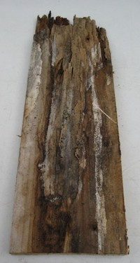 rotten old wooden window timber